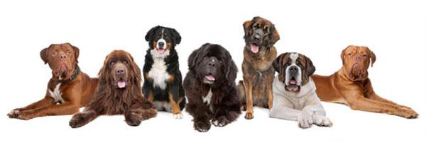 Стрижка собак в павловская слобода